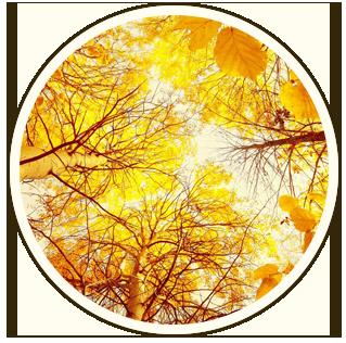 Солнечный клинкер: миллион естественных оттенков